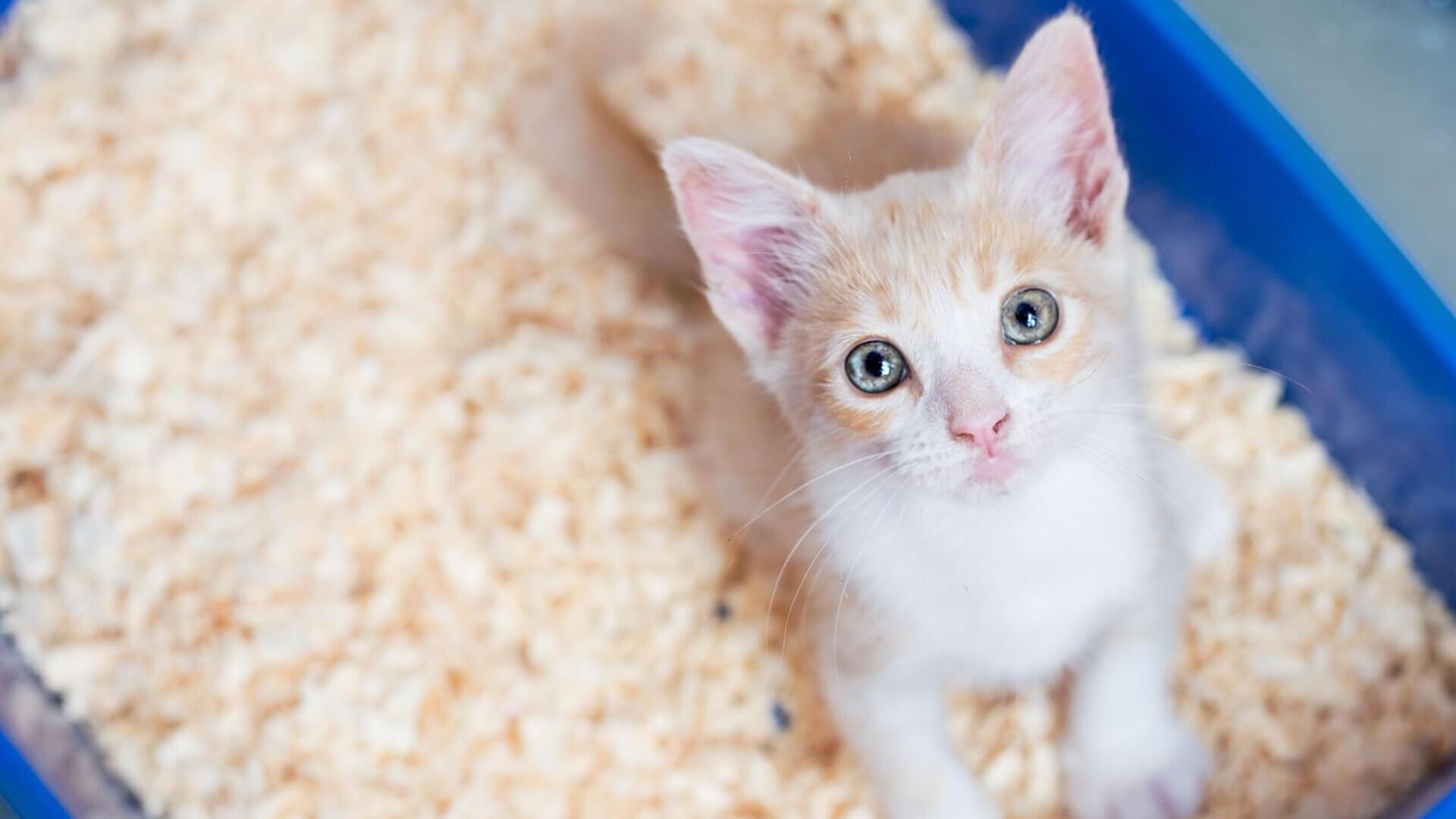 Trucos para enseñar a tu gato a utilizar el arenero
