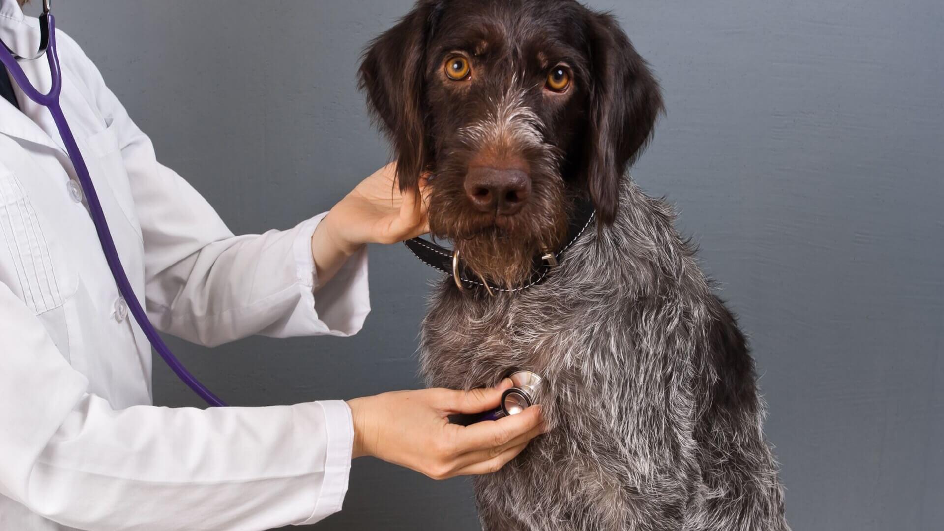 10 síntomas de estrés de perros