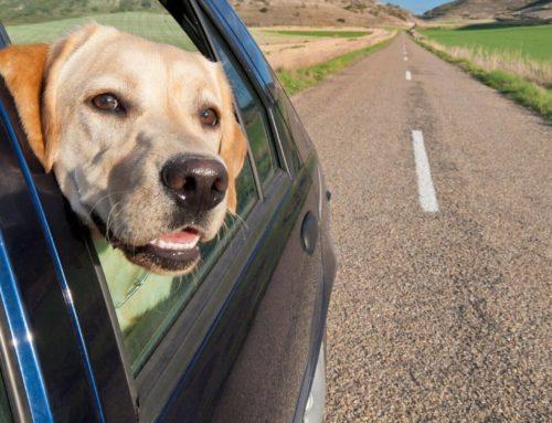 Los mejores lugares para viajar con mascota
