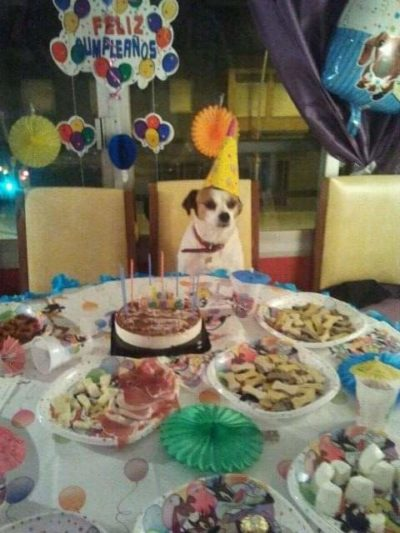 Homenaje perro