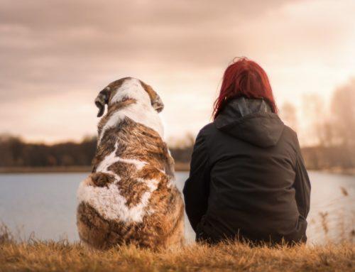 Opciones ante la pérdida de una mascota