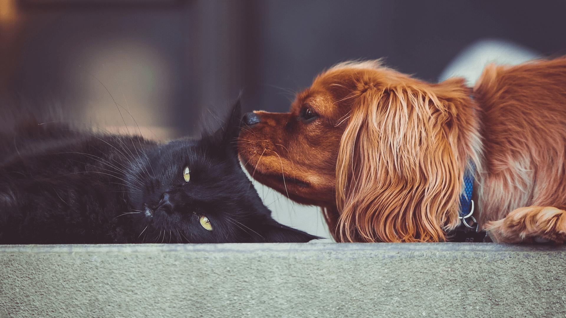 5 consejos para que un perro y un gato se lleven bien