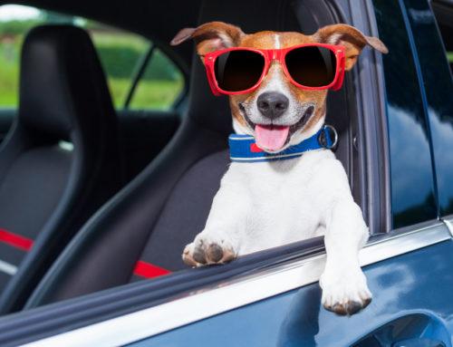 Cómo transportar mascotas en coche