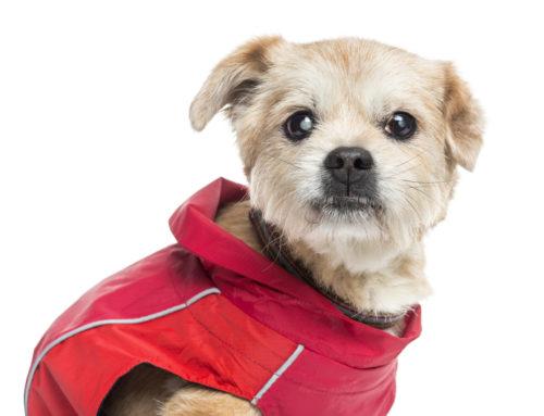 Motivos y consejos para cuidar la ceguera en perros