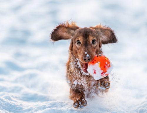 4 imprescindibles para que tu perro supere el invierno con éxito