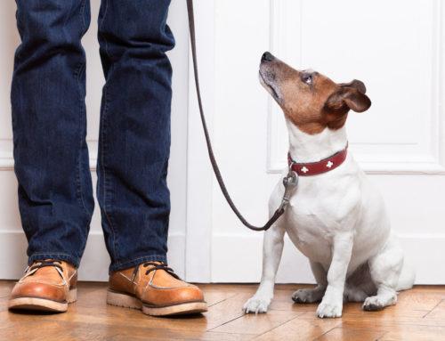 Obediencia básica en perros | 6 consejos para educarlos correctamente